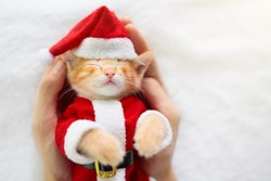 Baby cat in Christmas costume and Santa hat. Ginger newborn kitten sleeping under woolen blanket. Cozy Xmas winter day with pet at home. Nap time. Present for animal. Cats sleep, relax, rest.