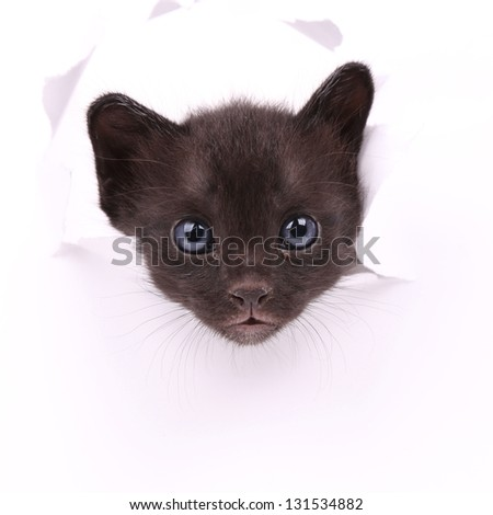 Baby cat in paper side torn hole isolated