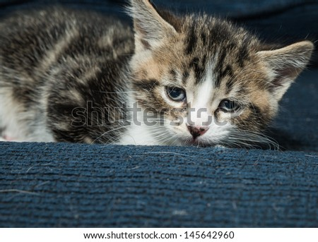 Baby cat resting on a sofa and relaxing
