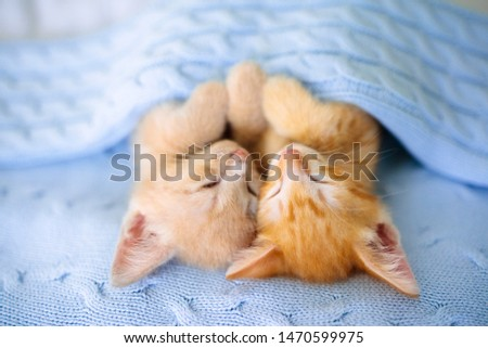 Baby cat sleeping. Ginger kitten on couch under knitted blanket. Two cats cuddling and hugging. Domestic animal. Sleep and cozy nap time. Home pet. Young kittens. Cute funny cats at home. #1470599975