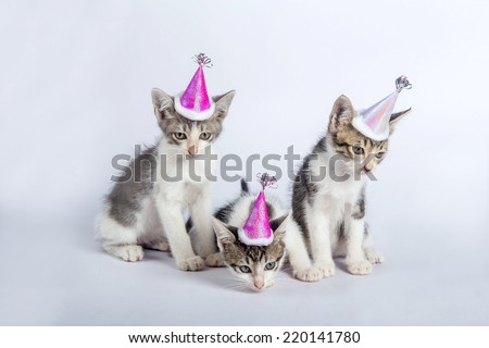 baby cats happy party