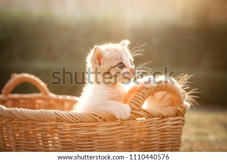 Baby cats in the basket looking forward