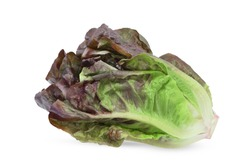 Baby cos lettuce leaves isolated on white background