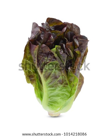 Baby cos lettuce leaves isolated on white background #1014218086