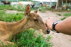 Baby deer at the farm. Eco, friendly pet. Animal. Contact zoo