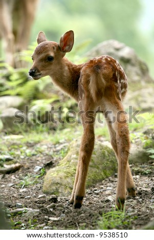 Baby Deer, Japan - stock photo