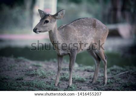 Baby deer , Resting deer , zoo , deer #1416455207