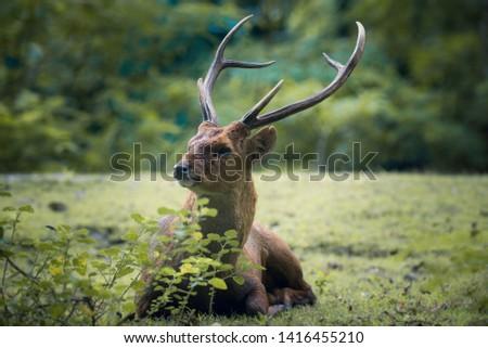 Baby deer , Resting deer , zoo , deer #1416455210