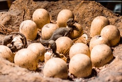 Baby dinosaur eggs hatching under warm natural sun light. The life cycle of a tyrannosaurus from embryo to breathing creature. Ancient predators, history concepts, evolution, and geology themes.