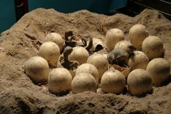 Baby dinosaurs are hatching from eggs
