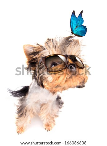 baby dog with fashion shades and blue butterfly on a white background