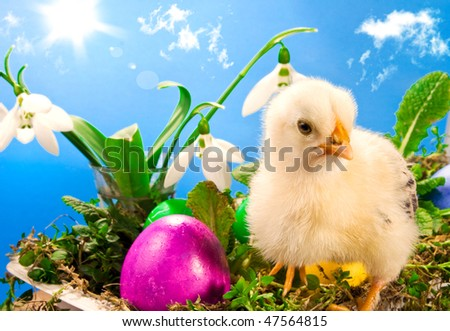 Baby Easter chick with painted eggs on a blue sky background
