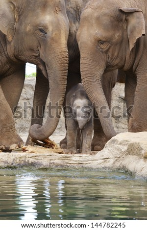 Baby elephant and mother #144782245