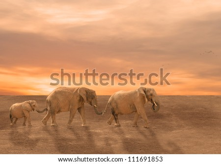 Baby Elephant Following Its Mother And Father, Outdoor