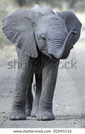 Baby Elephant in road