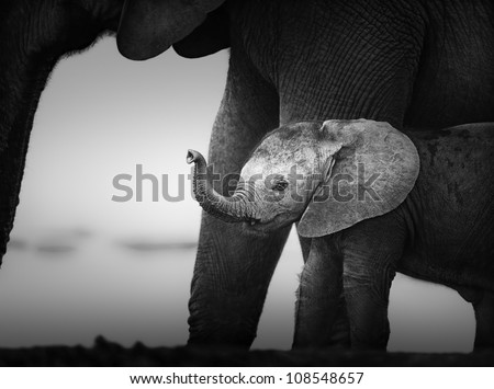 Baby Elephant next to Cow (Artistic processing) Addo National Park