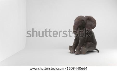 baby elephant sitting in white room Сток-фото ©