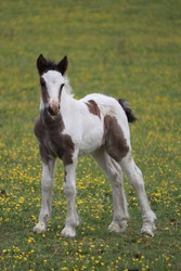 Baby foal standing up by itself