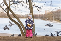 baby girl holds bread in her hands and feeds pigeons and ducks by the frozen pond