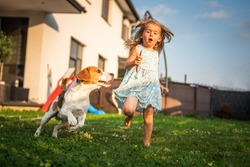 Baby girl running with beagle dog in garden on summer day. Domestic animal with children concept. Dog chasing child with a tennis ball.