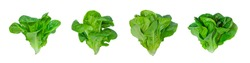 Baby Green Cos and Little gem Vegetables Salad isolated on white background.