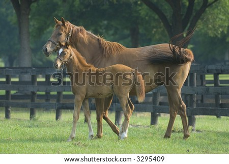 Baby horse and mare equine -- series 05 - stock photo