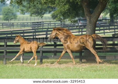 Baby horse and mare equine -- series 09