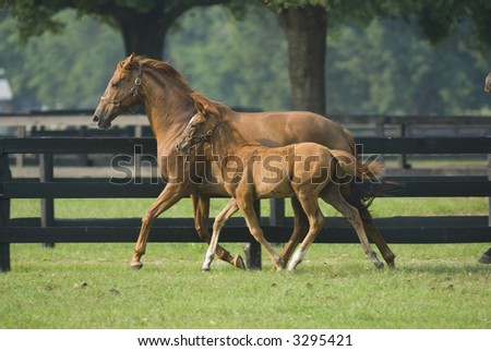 Baby horse and mare equine -- series 17