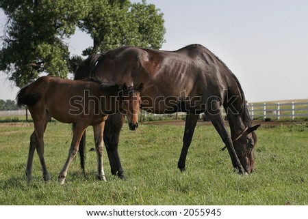 Baby horse and mother out on the pasture in the morning light.