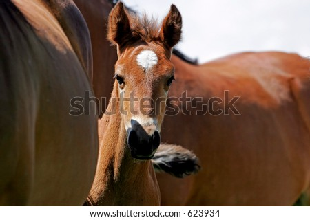Baby horse peeking out from behind its mother(shallow focus).