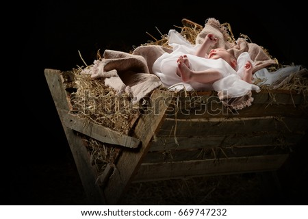 Baby Jesus on a manger on Christmas Day #669747232
