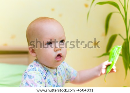 Baby keep leaf of home plant