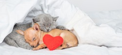 Baby kitten and toy terrier puppy sleep together with red heart under warm blanket on a bed at home. Empty space for text