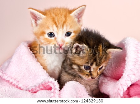 Baby kittens wrapped in a pink blanket with a pink background