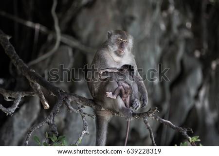 baby monkey #639228319
