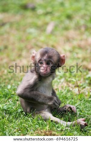 Baby monkey  #694616725