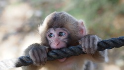 Baby monkey bite rope portrait