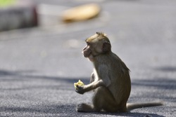 Baby monkeys are holding a bananas and sitting on the asphalt floor.