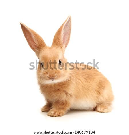 Baby of orange rabbit on white background #140679184