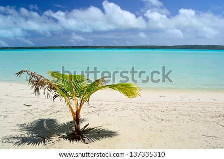 Baby palm tree growing up on the remote beach of Ee Island in an idyllic and uncontaminated environment with the turquoise water of Aitutaki lagoon in the background. Location: Cook Islands.