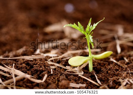 Baby plant growing from soil-new life
