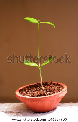Baby plant growing in a pot-new life
