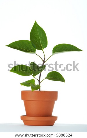 Baby plant in small flower pot. Isolated on white background. Space for text.