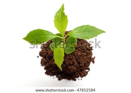 Baby plant on white - stock photo