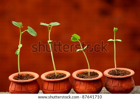 Baby plants growing from soil-New life