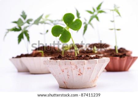 Baby plants-New life
