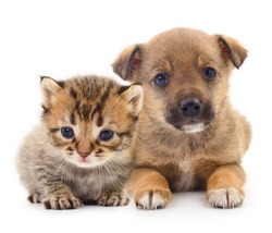 Baby puppy and kitten isolated on white background.