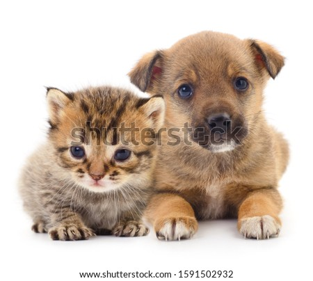 Baby puppy and kitten isolated on white background. Сток-фото ©