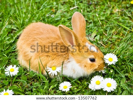 baby rabbit eating flowers on green grass