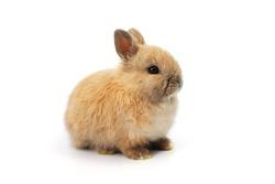 baby rabbit on white background